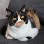 Candy Grzymskie Koty*PL
