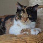 IC Daisy Grzymskie Koty*PL