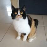 CH Candy Grzymskie Koty*PL