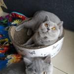 Iva Grzymskie Koty*PL